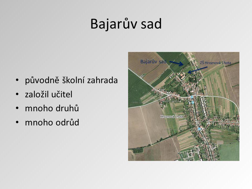 Bajarův sad původně školní zahrada založil učitel mnoho druhů