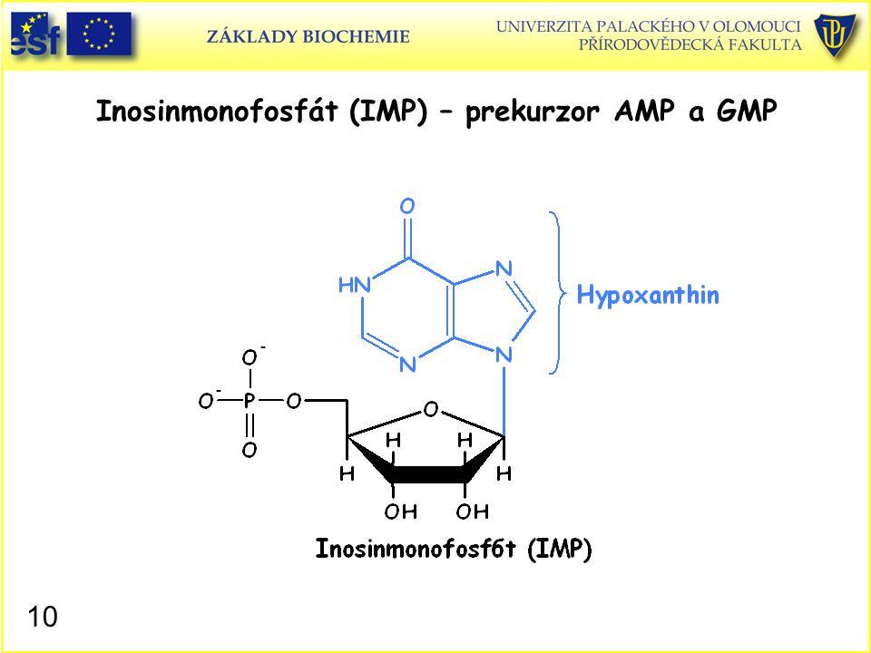 Inosinmonofosfát (IMP) – prekurzor AMP a GMP