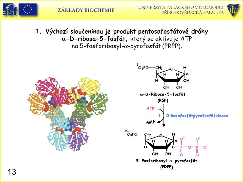Výchozí sloučeninou je produkt pentosafosfátové dráhy a-D-ribosa-5-fosfát, který se aktivuje ATP na 5-fosforibosyl-a-pyrofosfát (PRPP).