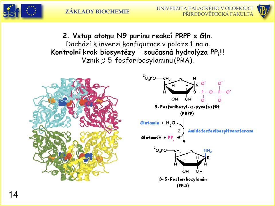 2. Vstup atomu N9 purinu reakcí PRPP s Gln