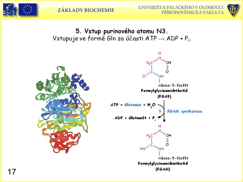 5. Vstup purinového atomu N3