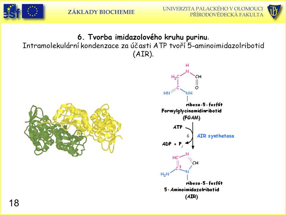 6. Tvorba imidazolového kruhu purinu