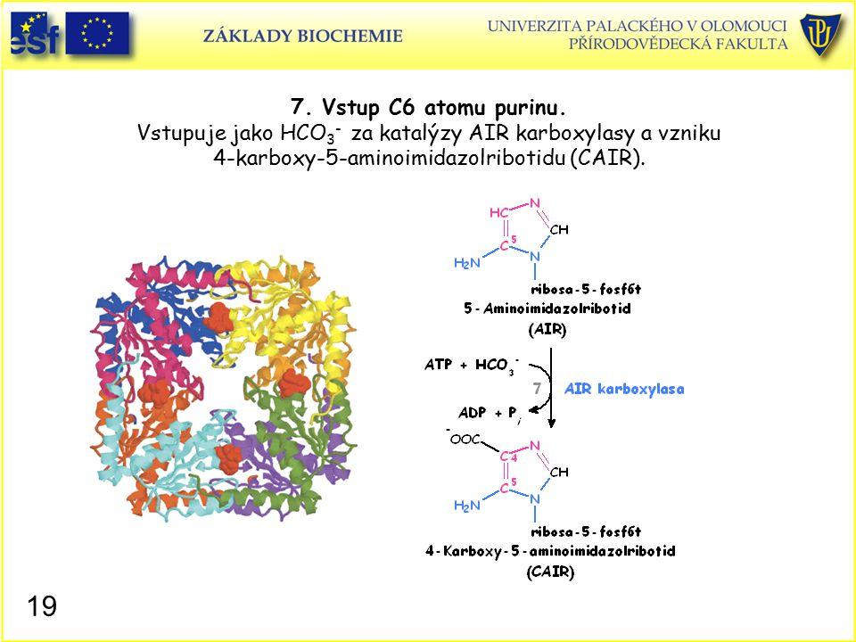 7. Vstup C6 atomu purinu. Vstupuje jako HCO3- za katalýzy AIR karboxylasy a vzniku 4-karboxy-5-aminoimidazolribotidu (CAIR).