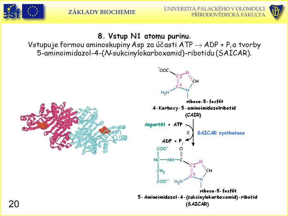 8. Vstup N1 atomu purinu. Vstupuje formou aminoskupiny Asp za účasti ATP  ADP + Pi a tvorby 5-aminoimidazol-4-(N-sukcinylokarboxamid)-ribotidu (SAICAR).