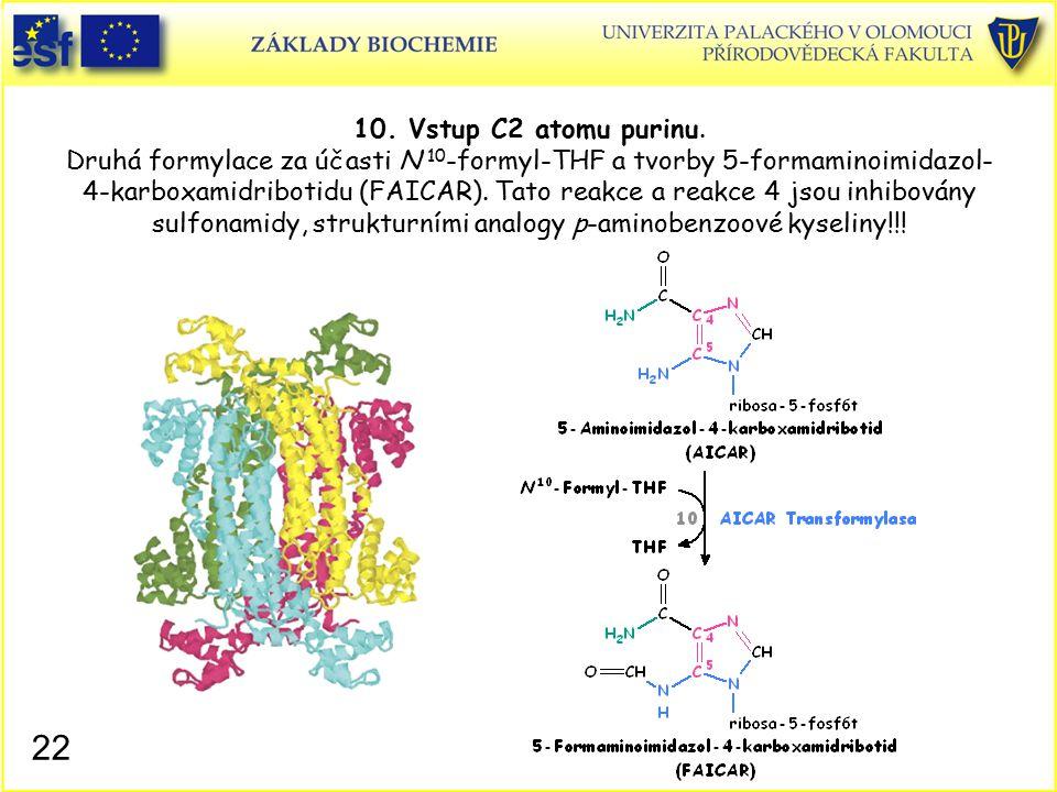10. Vstup C2 atomu purinu. Druhá formylace za účasti N 10-formyl-THF a tvorby 5-formaminoimidazol-4-karboxamidribotidu (FAICAR). Tato reakce a reakce 4 jsou inhibovány sulfonamidy, strukturními analogy p-aminobenzoové kyseliny!!!