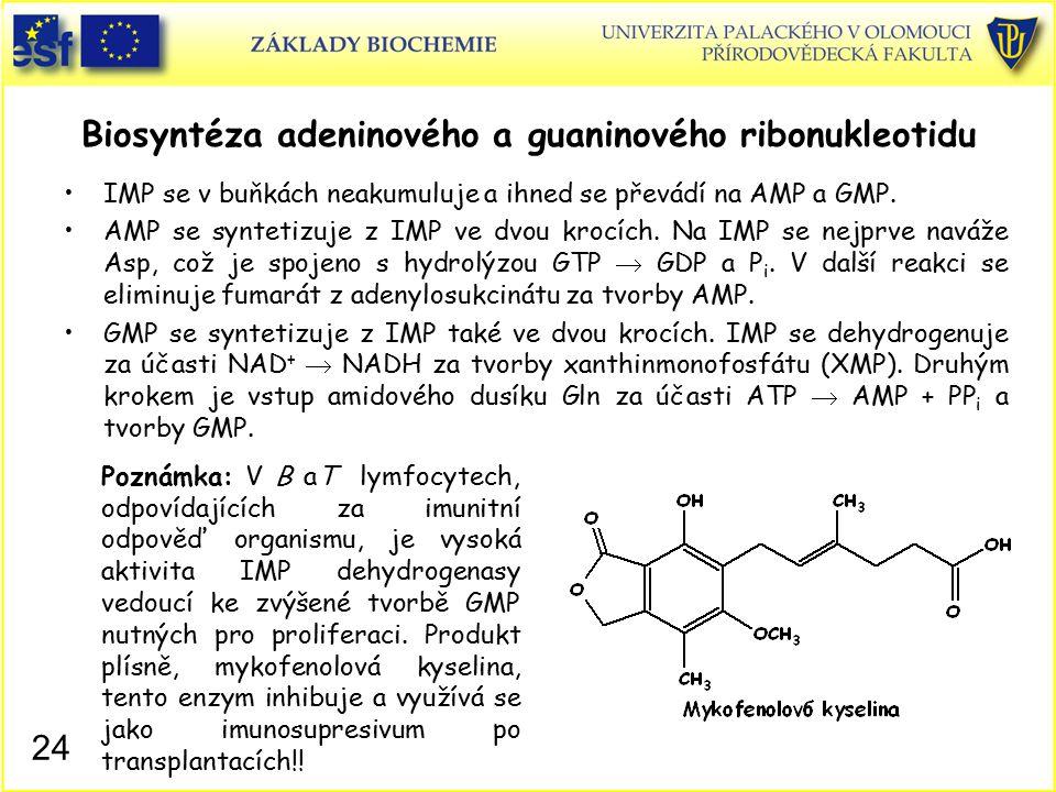 Biosyntéza adeninového a guaninového ribonukleotidu