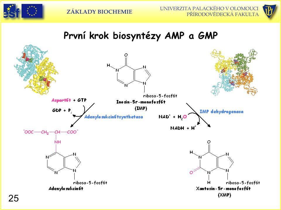 První krok biosyntézy AMP a GMP