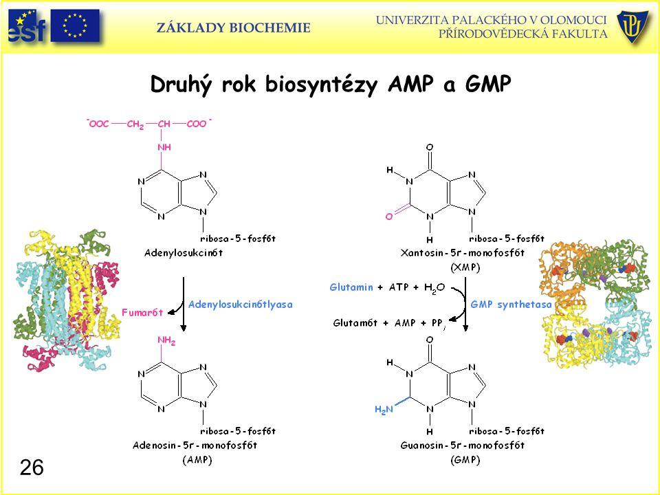 Druhý rok biosyntézy AMP a GMP