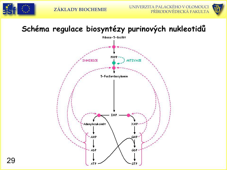 Schéma regulace biosyntézy purinových nukleotidů