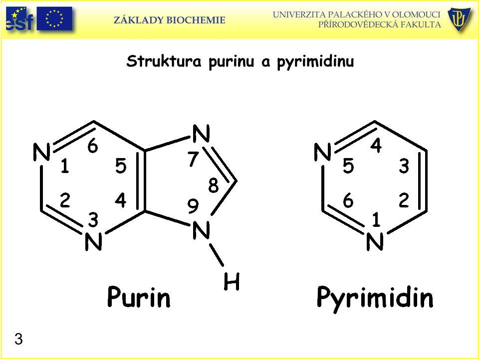Struktura purinu a pyrimidinu