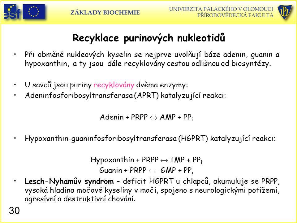 Recyklace purinových nukleotidů