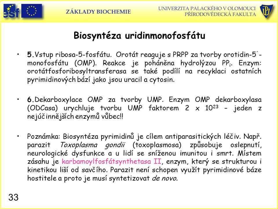 Biosyntéza uridinmonofosfátu