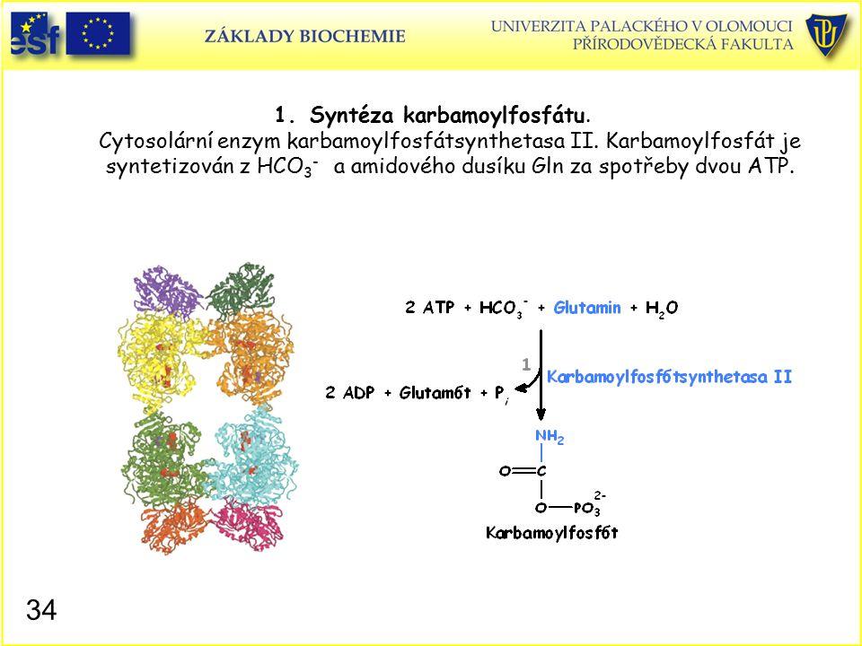 Syntéza karbamoylfosfátu