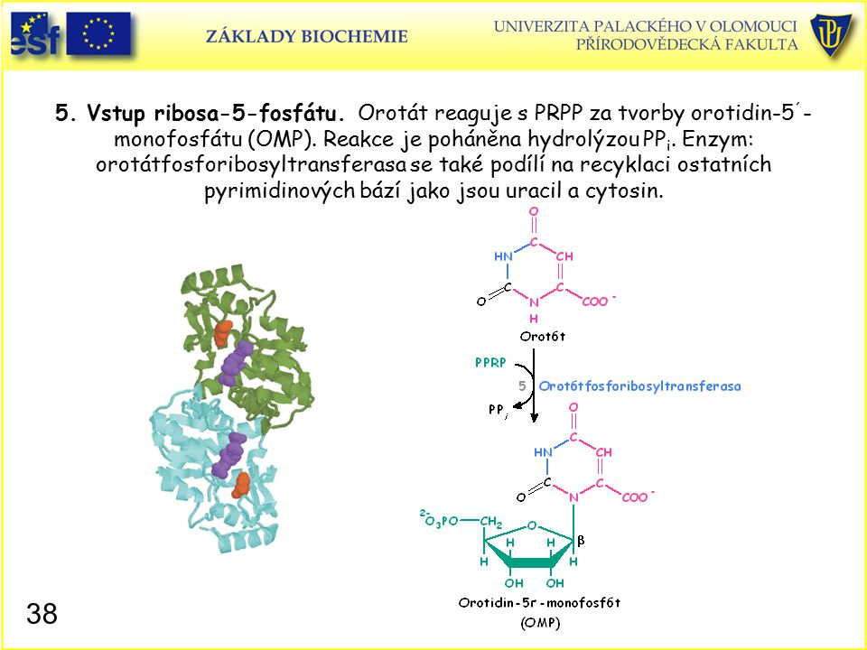 5. Vstup ribosa-5-fosfátu