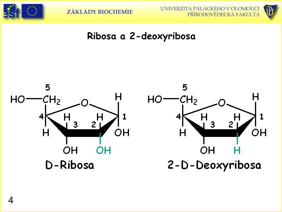 Ribosa a 2-deoxyribosa Ribosa 2-Deoxyribosa