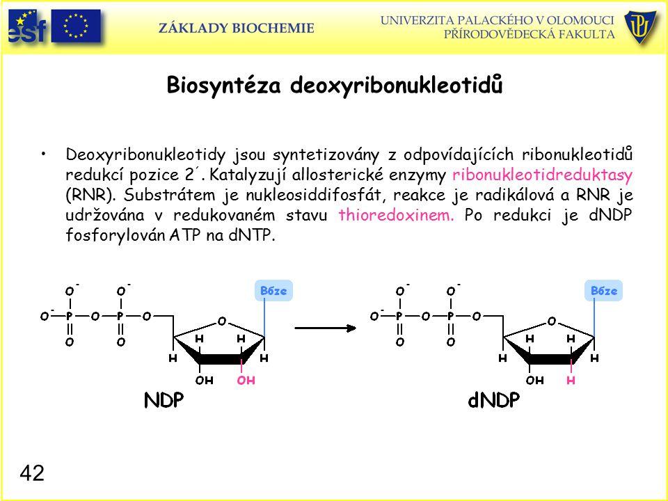 Biosyntéza deoxyribonukleotidů