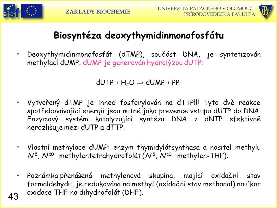 Biosyntéza deoxythymidinmonofosfátu
