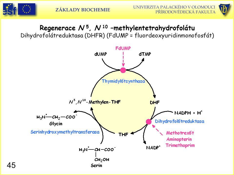 Regenerace N 5, N 10 –methylentetrahydrofolátu Dihydrofolátreduktasa (DHFR) (FdUMP = fluordeoxyuridinmonofosfát)