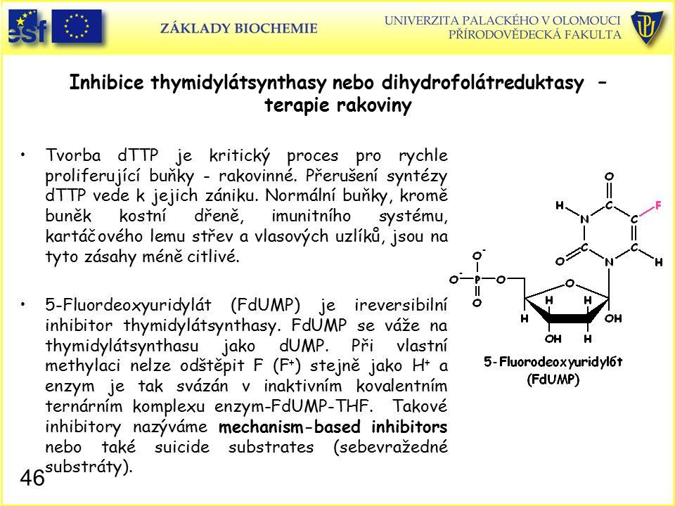 Inhibice thymidylátsynthasy nebo dihydrofolátreduktasy – terapie rakoviny