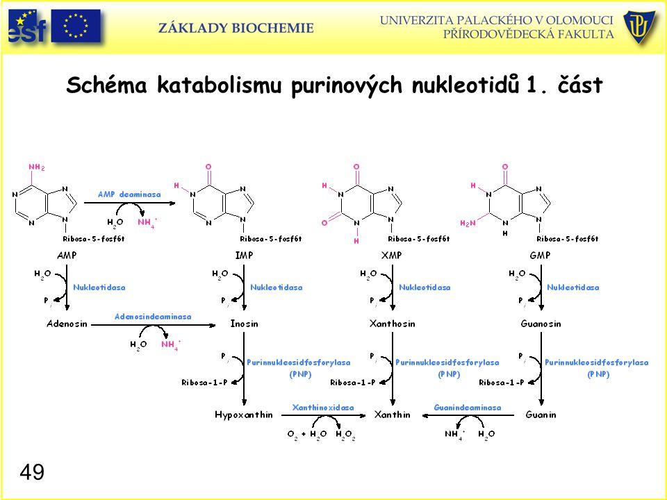 Schéma katabolismu purinových nukleotidů 1. část