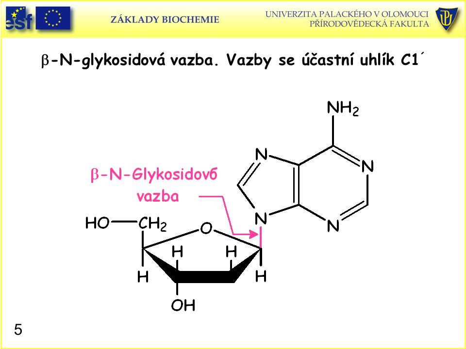 b-N-glykosidová vazba. Vazby se účastní uhlík C1´