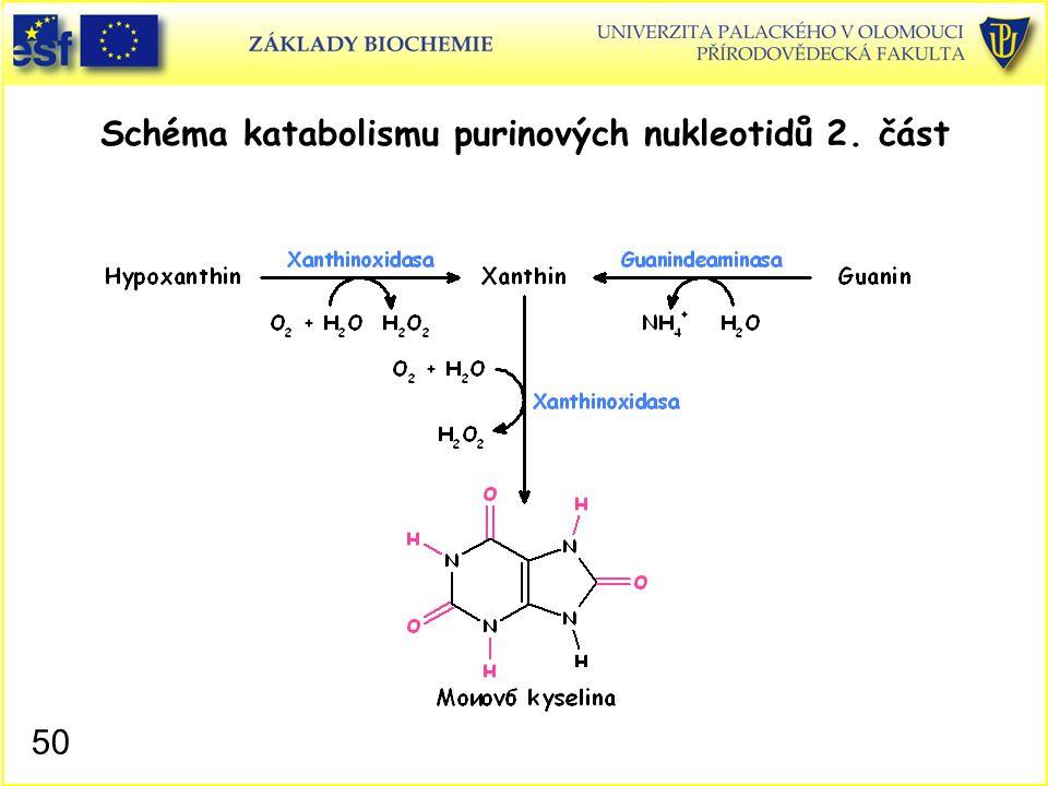 Schéma katabolismu purinových nukleotidů 2. část