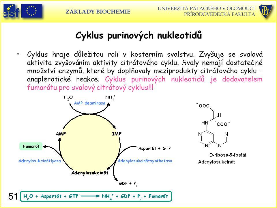 Cyklus purinových nukleotidů