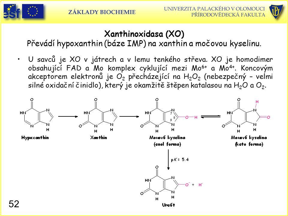 Xanthinoxidasa (XO) Převádí hypoxanthin (báze IMP) na xanthin a močovou kyselinu.