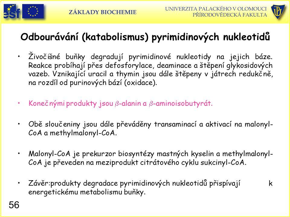 Odbourávání (katabolismus) pyrimidinových nukleotidů