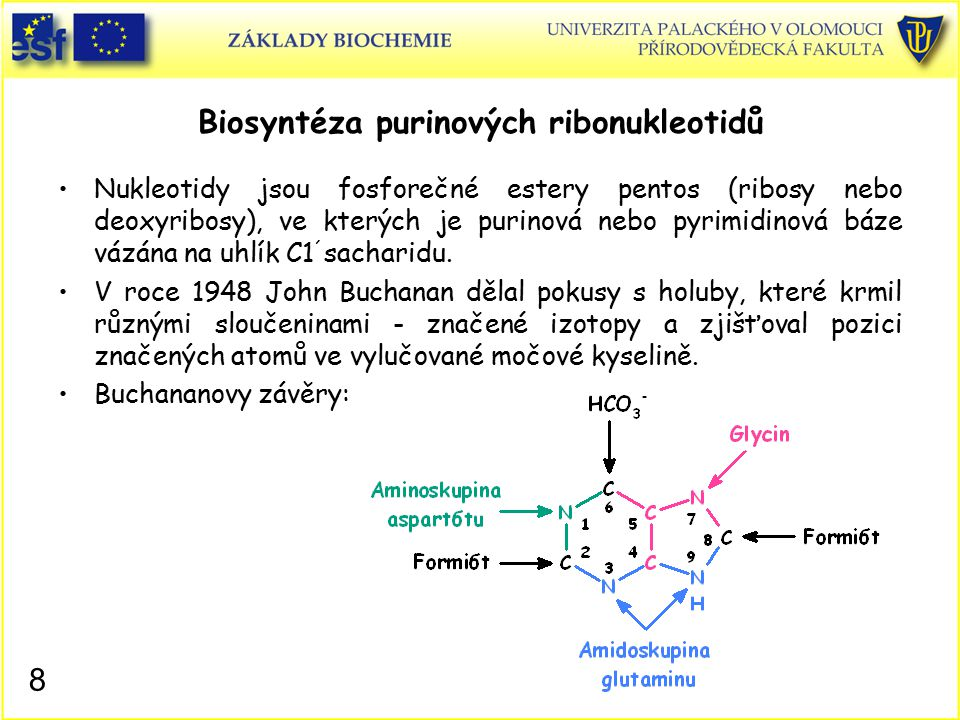 Biosyntéza purinových ribonukleotidů