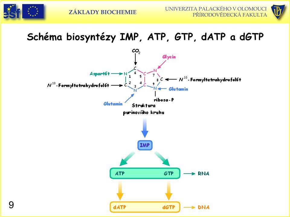 Schéma biosyntézy IMP, ATP, GTP, dATP a dGTP