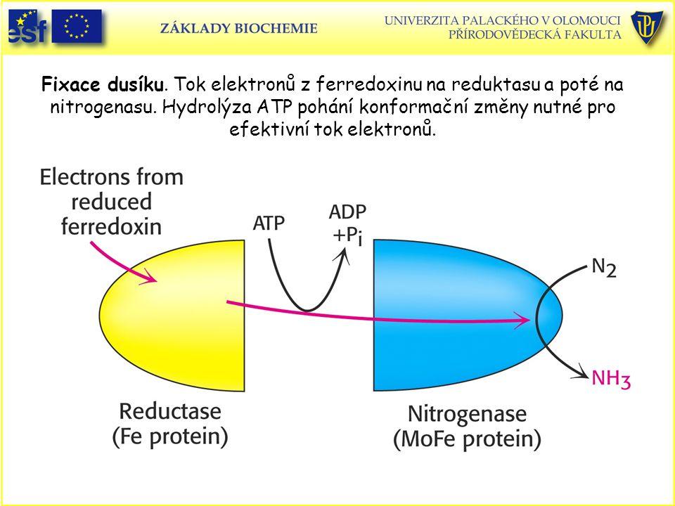 Fixace dusíku. Tok elektronů z ferredoxinu na reduktasu a poté na nitrogenasu.
