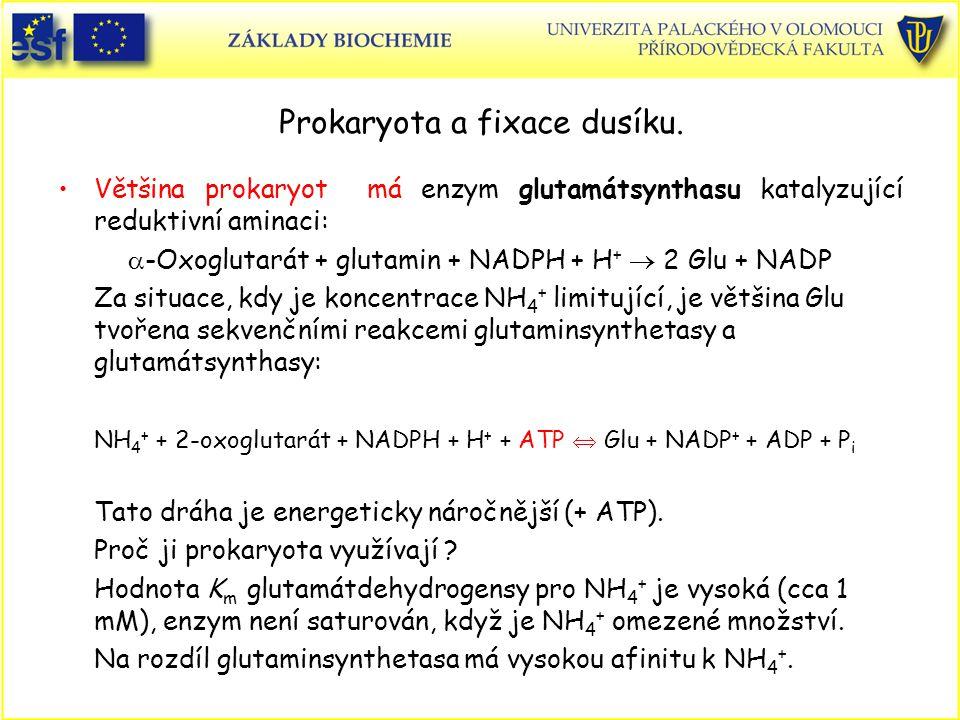 Prokaryota a fixace dusíku.