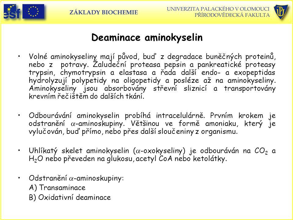 Deaminace aminokyselin