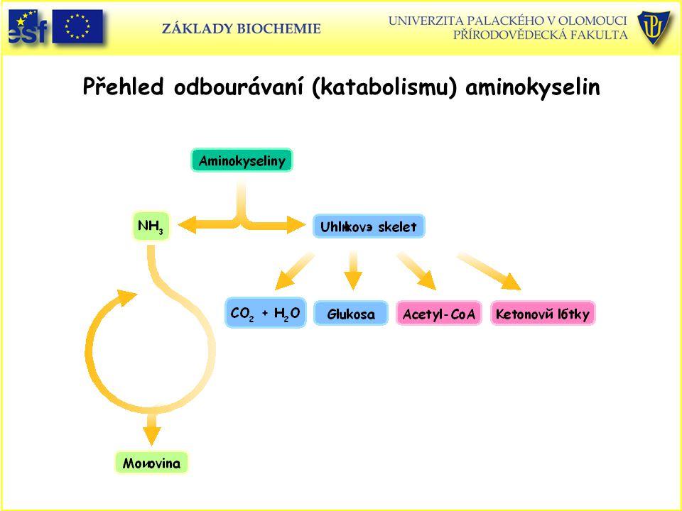Přehled odbourávaní (katabolismu) aminokyselin