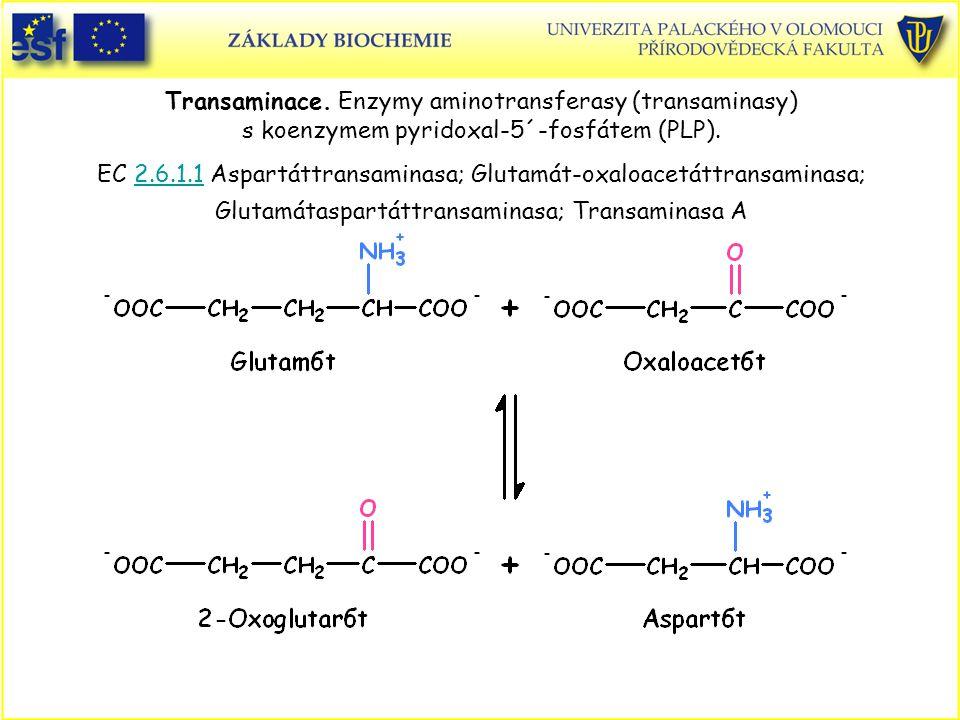 Transaminace. Enzymy aminotransferasy (transaminasy) s koenzymem pyridoxal-5´-fosfátem (PLP). EC 2.6.1.1 Aspartáttransaminasa; Glutamát-oxaloacetáttransaminasa; Glutamátaspartáttransaminasa; Transaminasa A