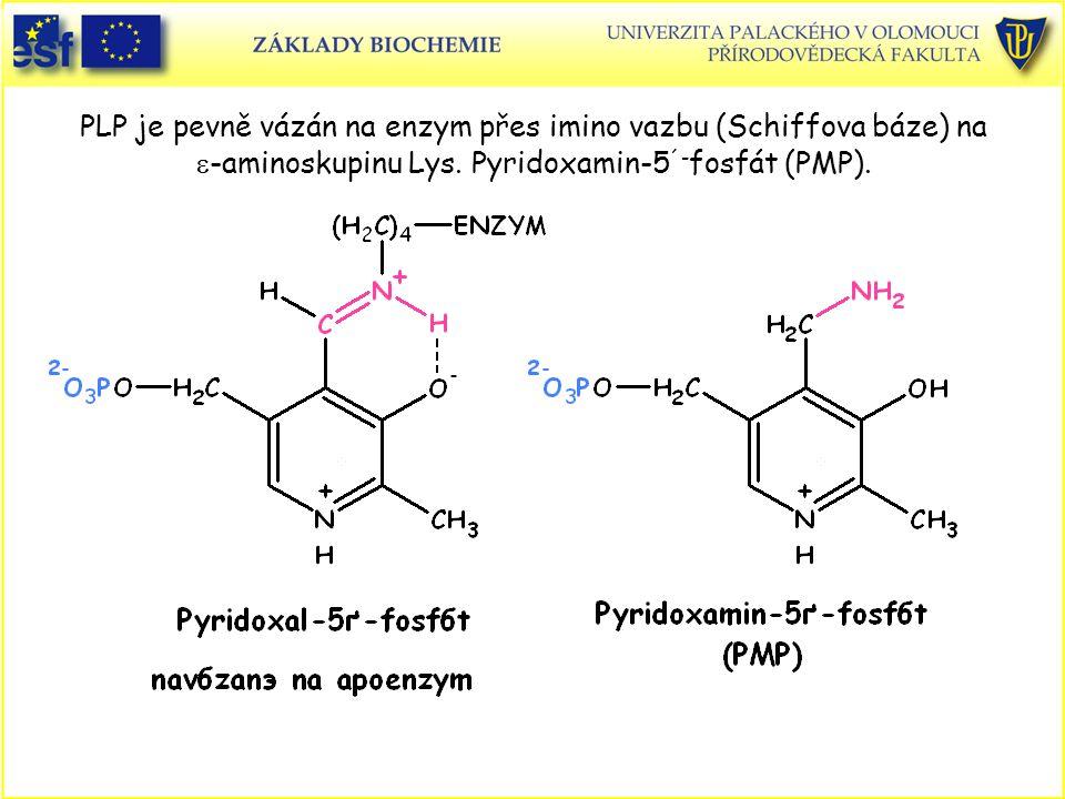 PLP je pevně vázán na enzym přes imino vazbu (Schiffova báze) na e-aminoskupinu Lys. Pyridoxamin-5´-fosfát (PMP).