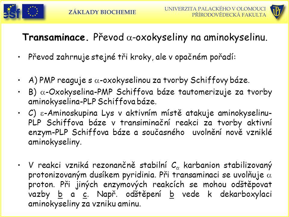 Transaminace. Převod a-oxokyseliny na aminokyselinu.