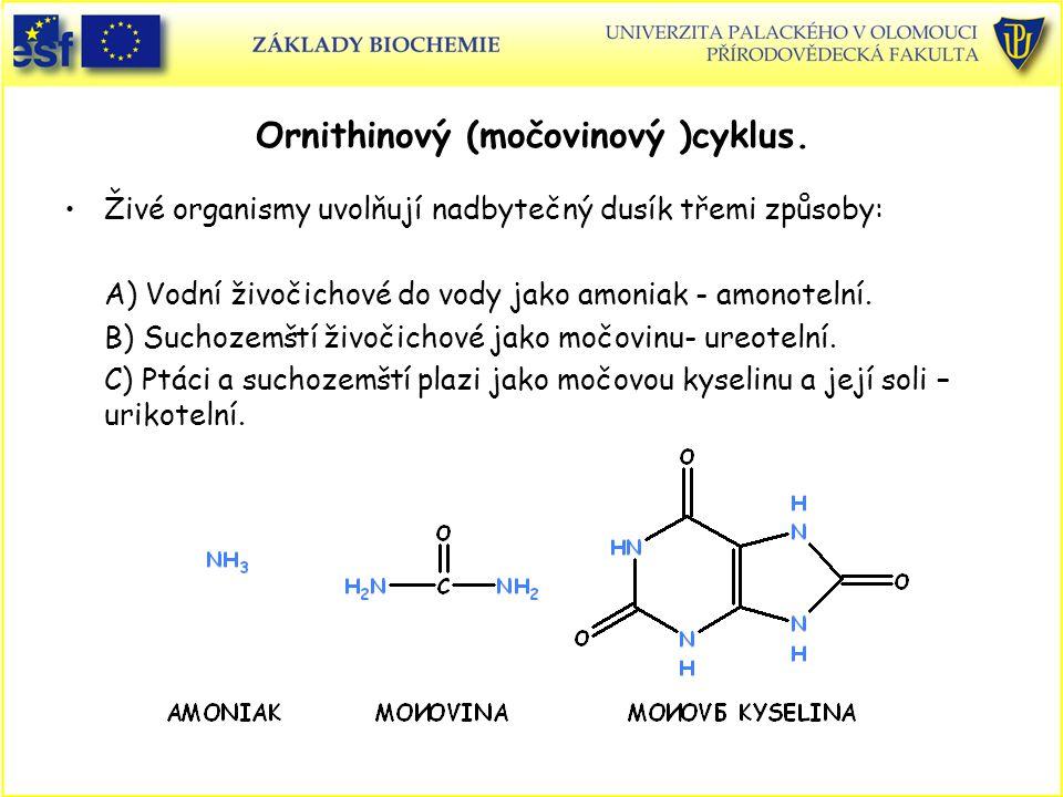 Ornithinový (močovinový )cyklus.