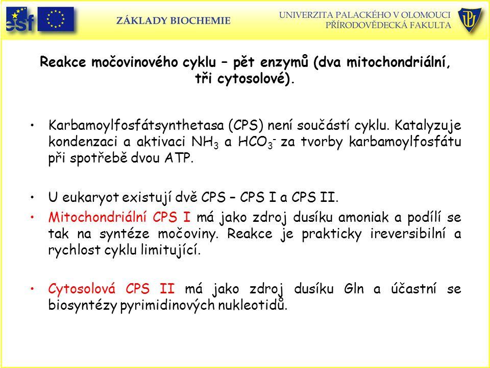 U eukaryot existují dvě CPS – CPS I a CPS II.