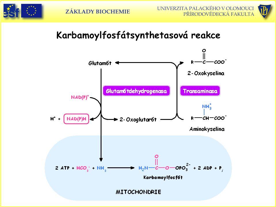 Karbamoylfosfátsynthetasová reakce