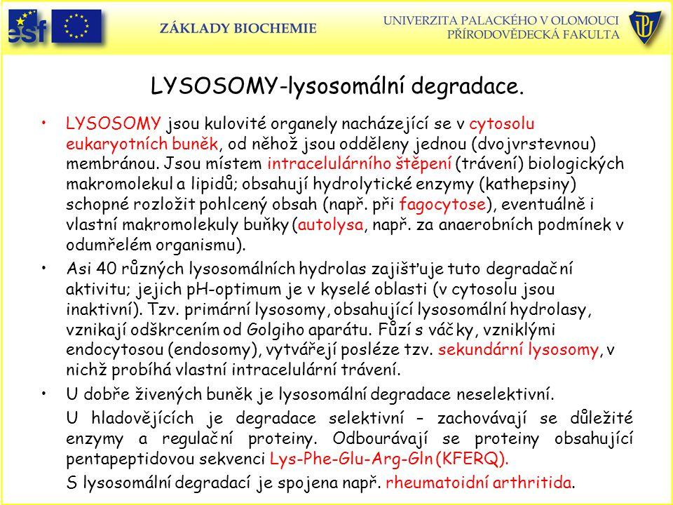 LYSOSOMY-lysosomální degradace.