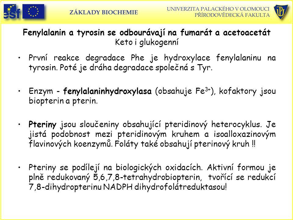 Fenylalanin a tyrosin se odbourávají na fumarát a acetoacetát Keto i glukogenní