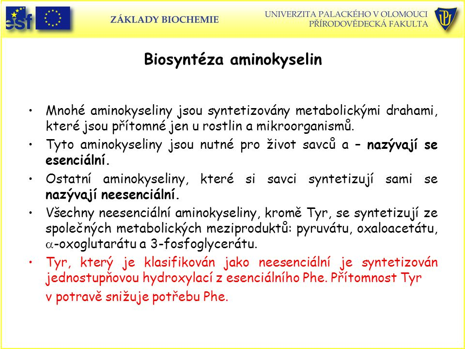 Biosyntéza aminokyselin