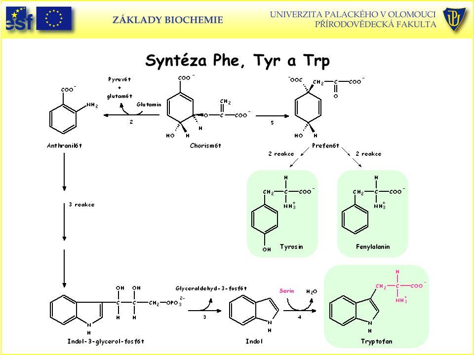 Syntéza Phe, Tyr a Trp Aminokyseliny, syntéza Phe, Tyr a Trp