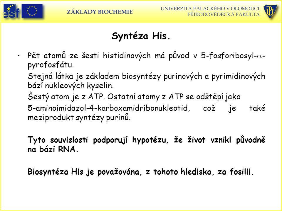 Syntéza His. Pět atomů ze šesti histidinových má původ v 5-fosforibosyl-a-pyrofosfátu.