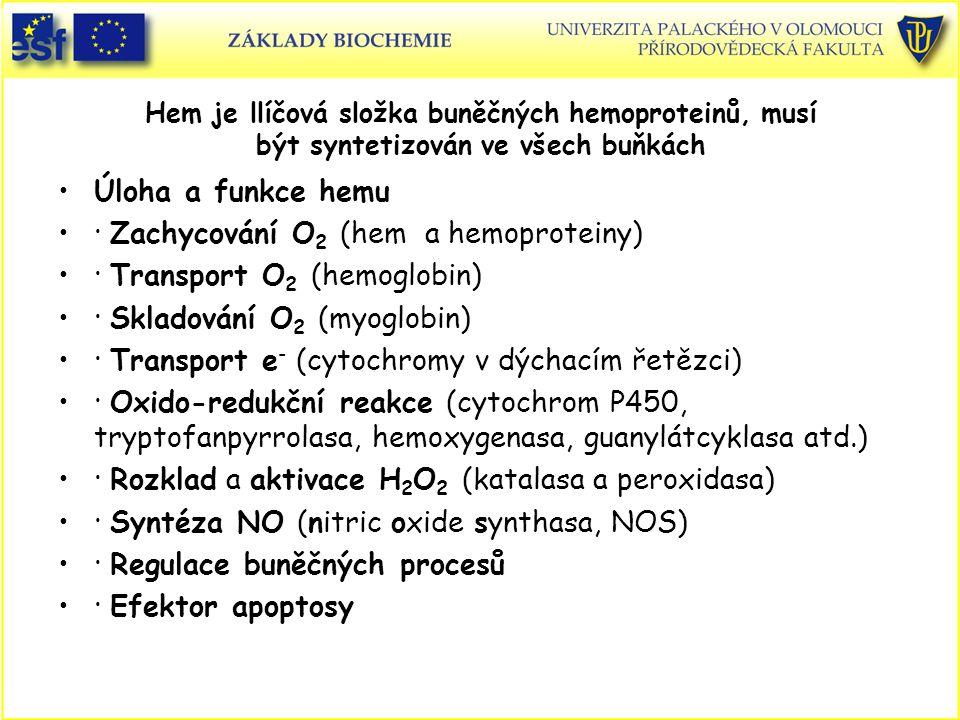 · Zachycování O2 (hem a hemoproteiny) · Transport O2 (hemoglobin)
