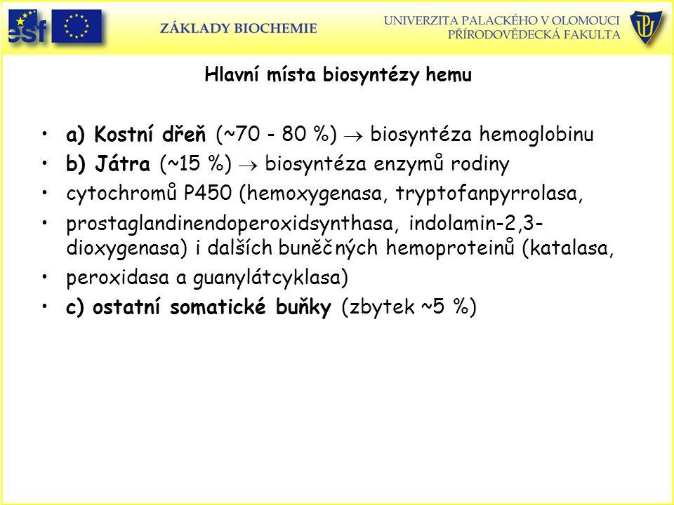 Hlavní místa biosyntézy hemu