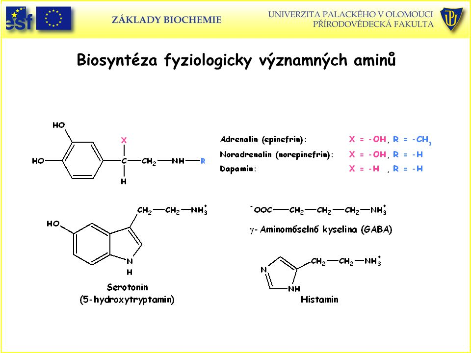 Biosyntéza fyziologicky významných aminů
