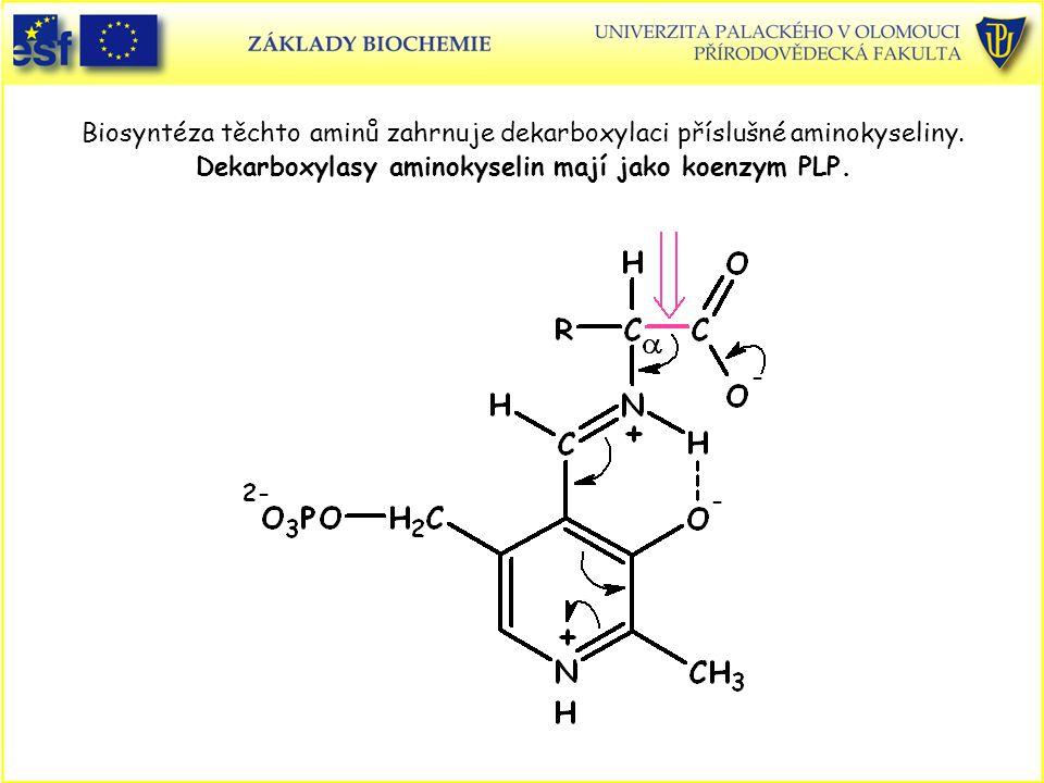 Biosyntéza těchto aminů zahrnuje dekarboxylaci příslušné aminokyseliny
